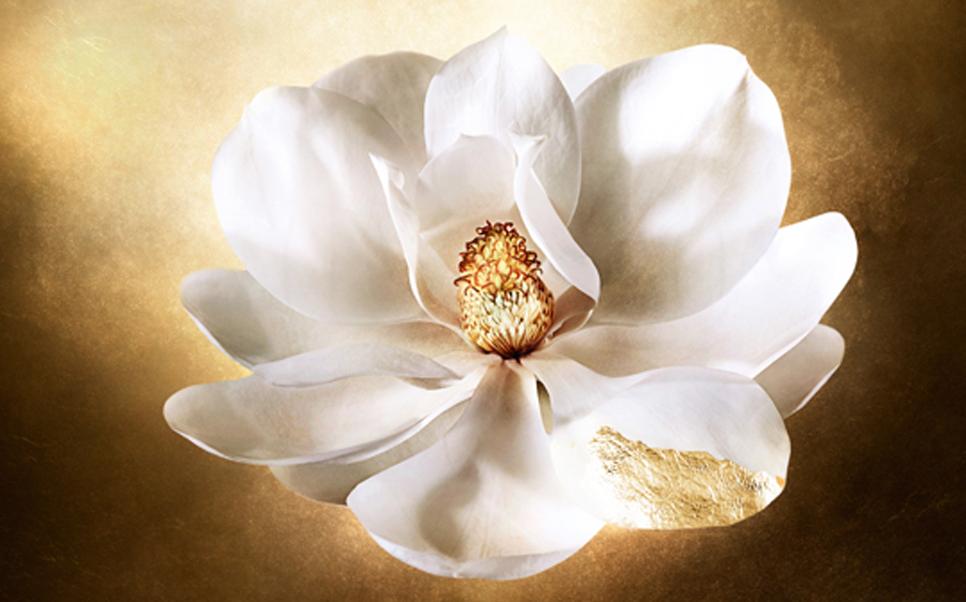 a-magnolia